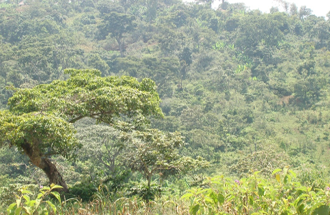 Agro-forestry of Gedeo - Under tentative list of  UNESCO(2)