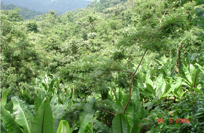 Agro-forestry of Gedeo - Under tentative list of  UNESCO(3)
