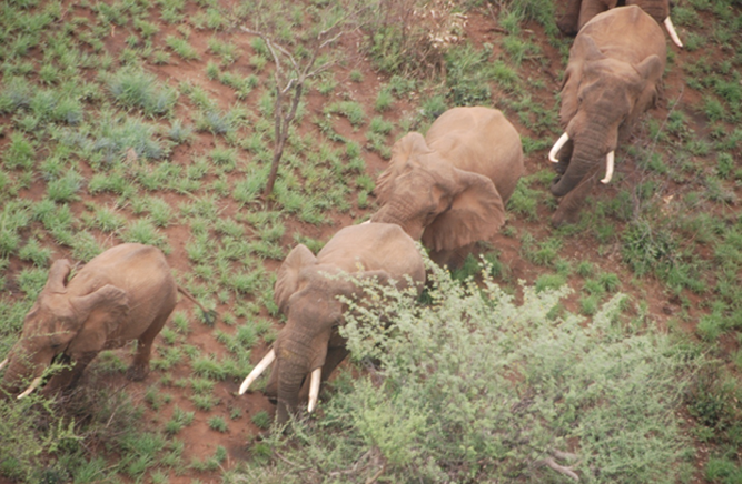 Group of Elephants at the Omo National Park