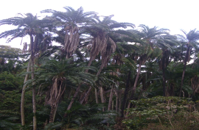 Palm Tree in the Park